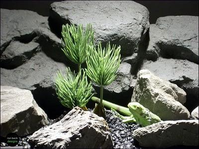 reptile plants: succulent pine grass