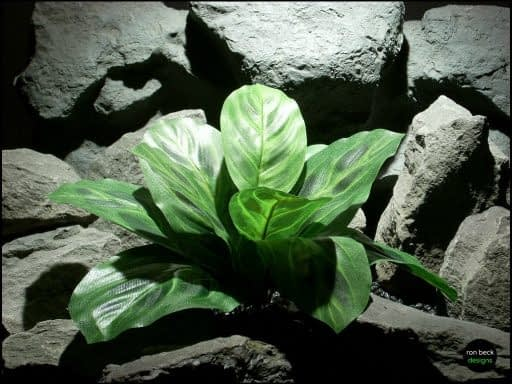 silk reptile or snake habitat plants: prayer plant srp130 from ron beck designs