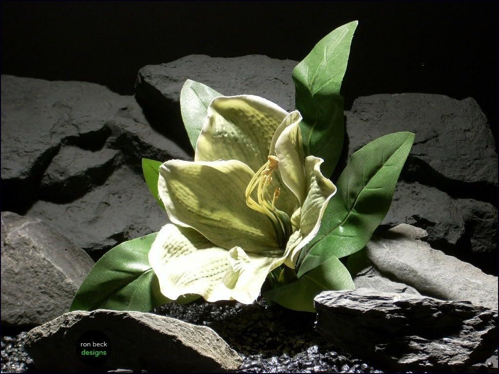 reptile habitat plants Amaryllis srp057 silk ron beck designs