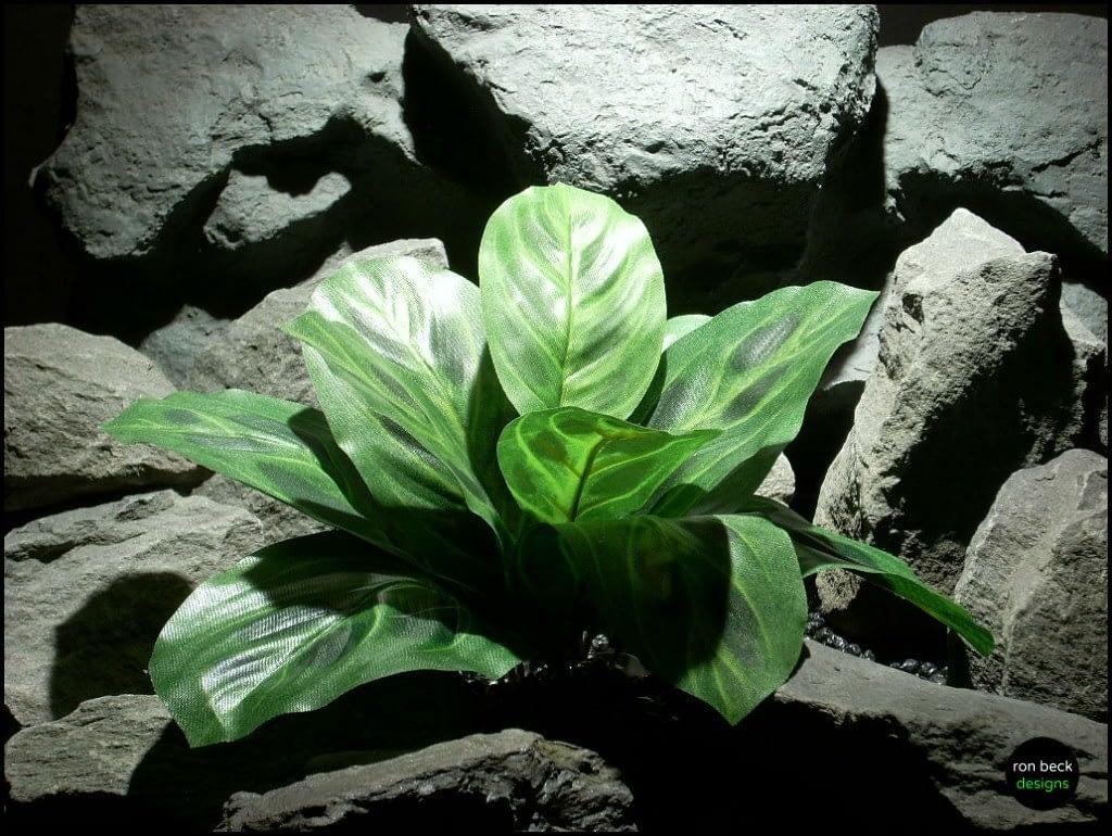 silk reptile or snake habitat plants prayer plant srp130 from ron beck designs