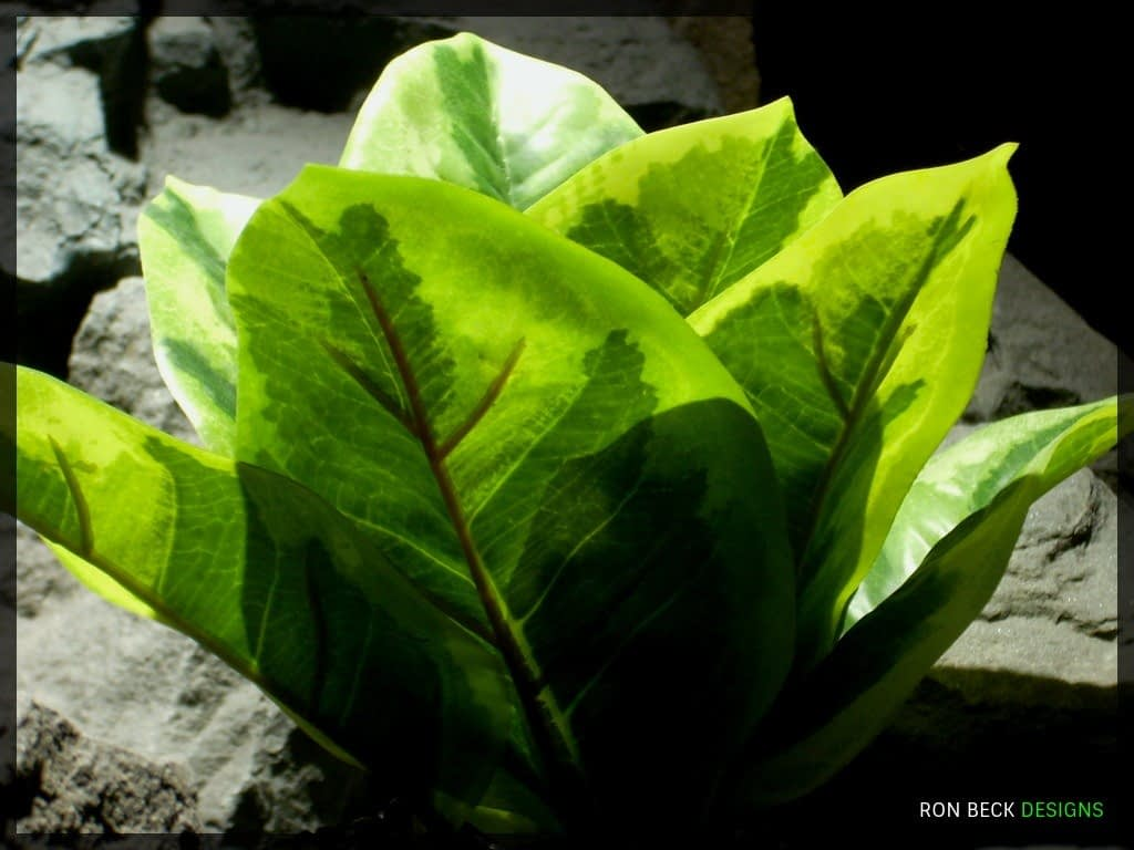 Variegated Rubber Plant - Artificial Reptile Plant - Real Touch - srp320 2