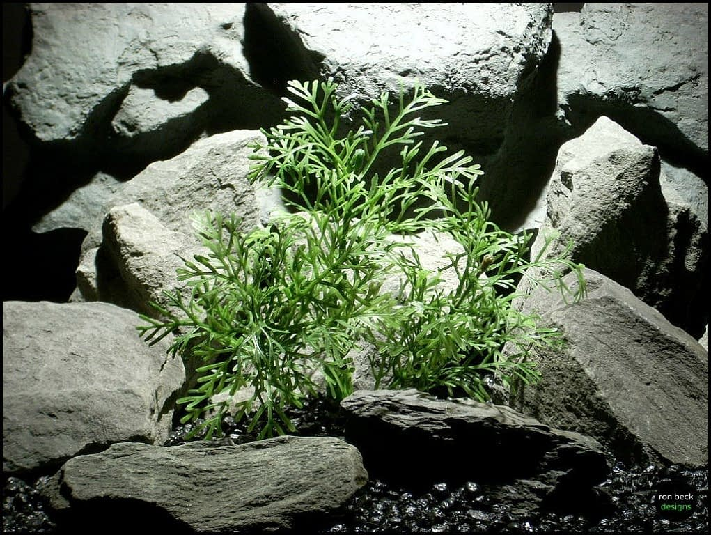 plastic aquarium plants dill bush pap129 from ron beck designs