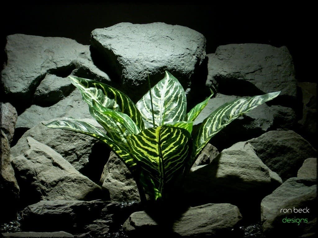 custom order silk reptile plant zebra plant real touch from ron beck designs 1