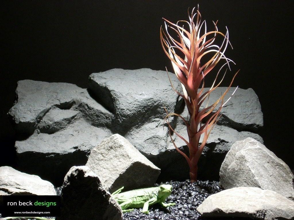 reptile habitat plants agave mellon red prp006  ron beck designs