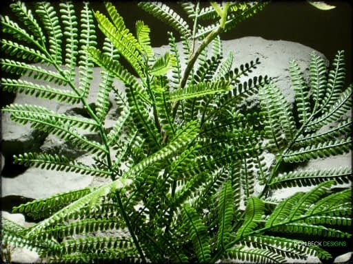 Artificial Mimosa Leaf Spray - Artificial Reptile Plant - Ron Beck Designs prp322 4