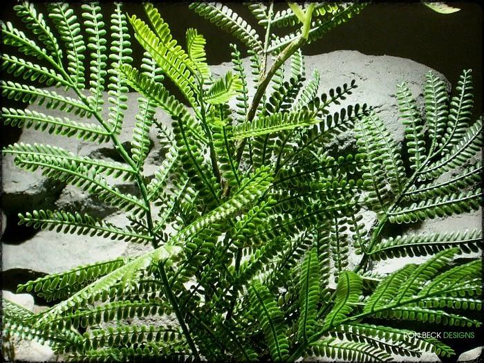 Artificial Mimosa Leaf Spray - Artificial Reptile Plant - Ron Beck Designs prp322 4