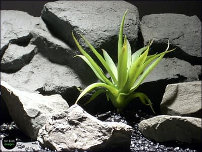 reptile habitat plants succulent prp053 plstc. latex ron beck designs
