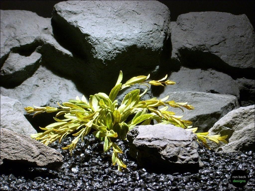 plastic aquarium plants tea dried look flame grass pap083