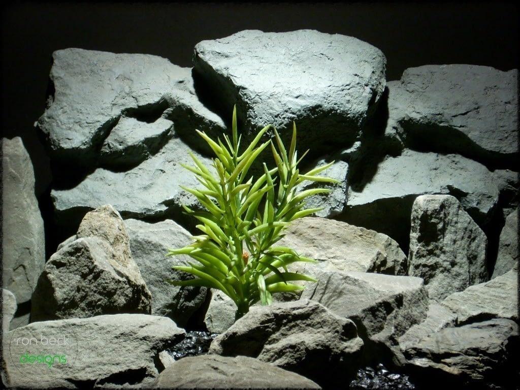 reptile plant triple bean succulent prs233 ron beck designs