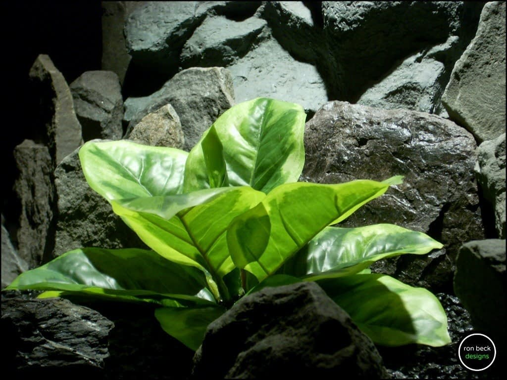 Reptile Plant Variegated Rubber Leaf Plant from ron beck designs. srp193