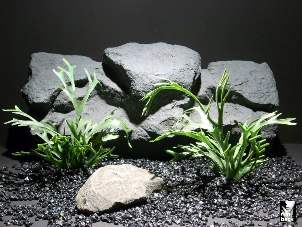aquarium plants staghorn fern pap193 plastic  ron beck designs