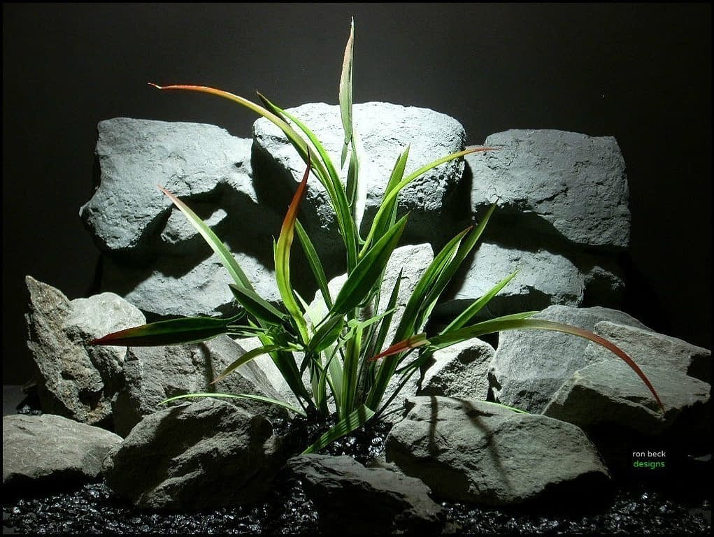 plastic aquarium plant arrowhead philodendron red tip pap126 from ron beck designs