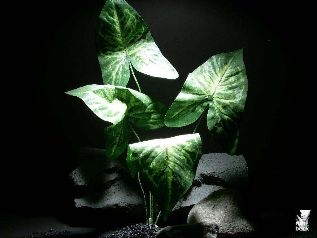 reptile habitat plants syngonium leaf xl 4x sap280 silk  ron beck designs