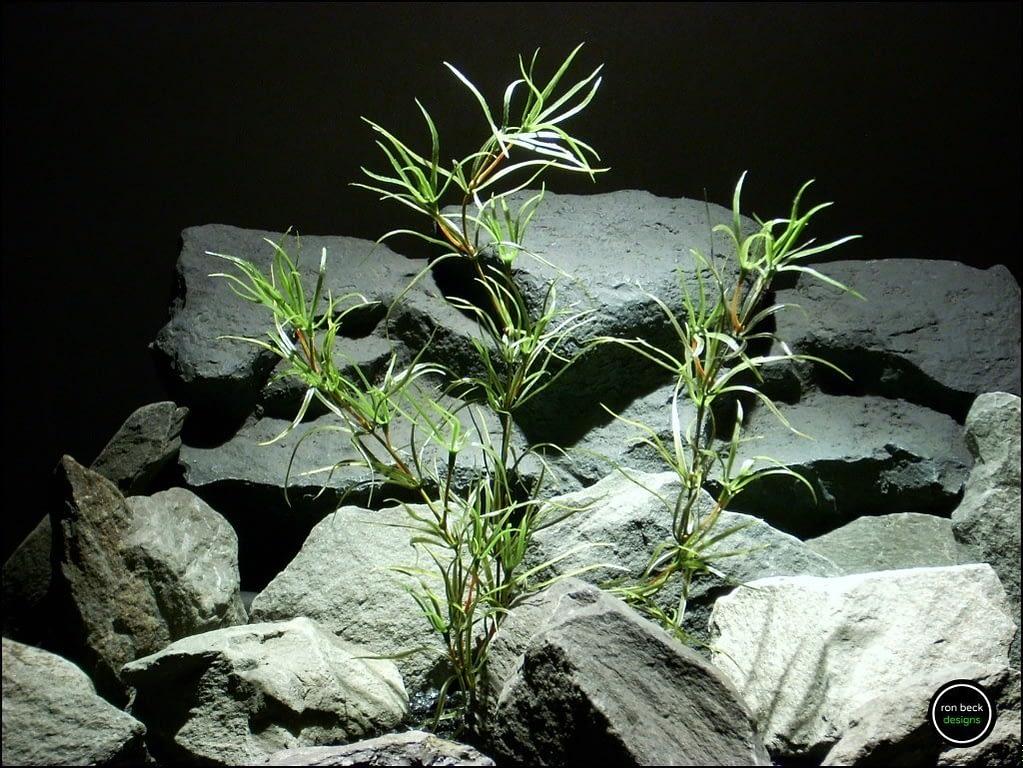 plastic-aquarium-plant-asparagus-pap160-ron-beck-designs