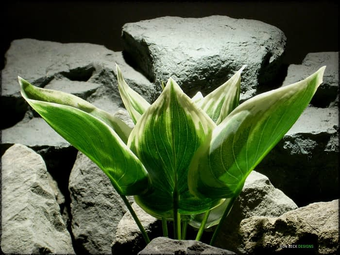 Artificial Silk Variegated Hosta Leaves - Artificial Reptile Plant - srp331 2