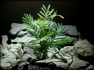 Artificial Mimosa Leaf Spray - Artificial Reptile Plant - Ron Beck Designs prp322