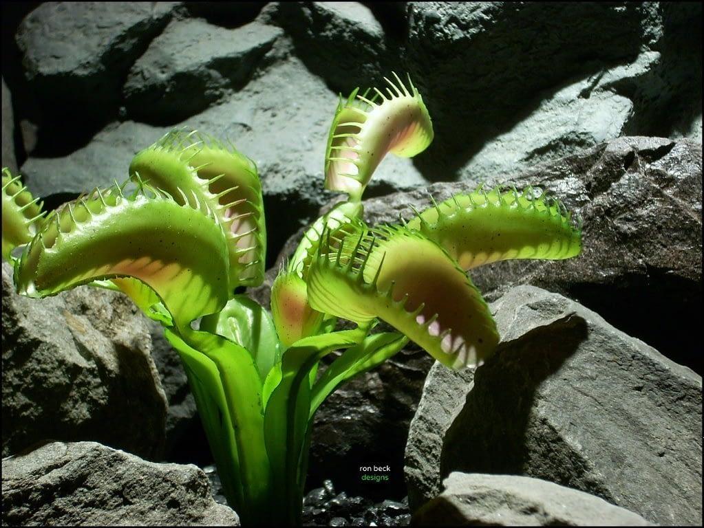 plastic reptile terrarium plant venus flytrap from ron beck designs, prp210 2
