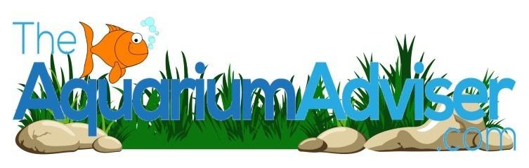 The aquarium adviser   theaquariumadviser.com