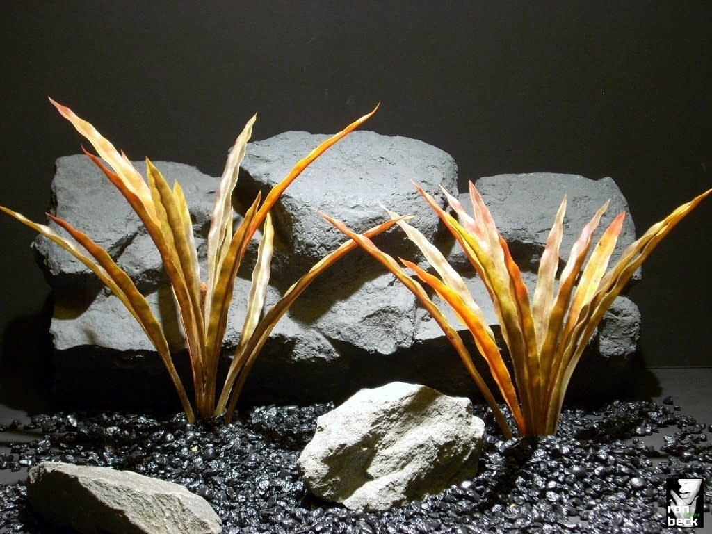 aquarium plants fall blades pap192 ron beck designs