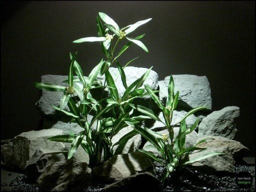 silk aquarium plant dracena greens sarp123 from ron beck designs