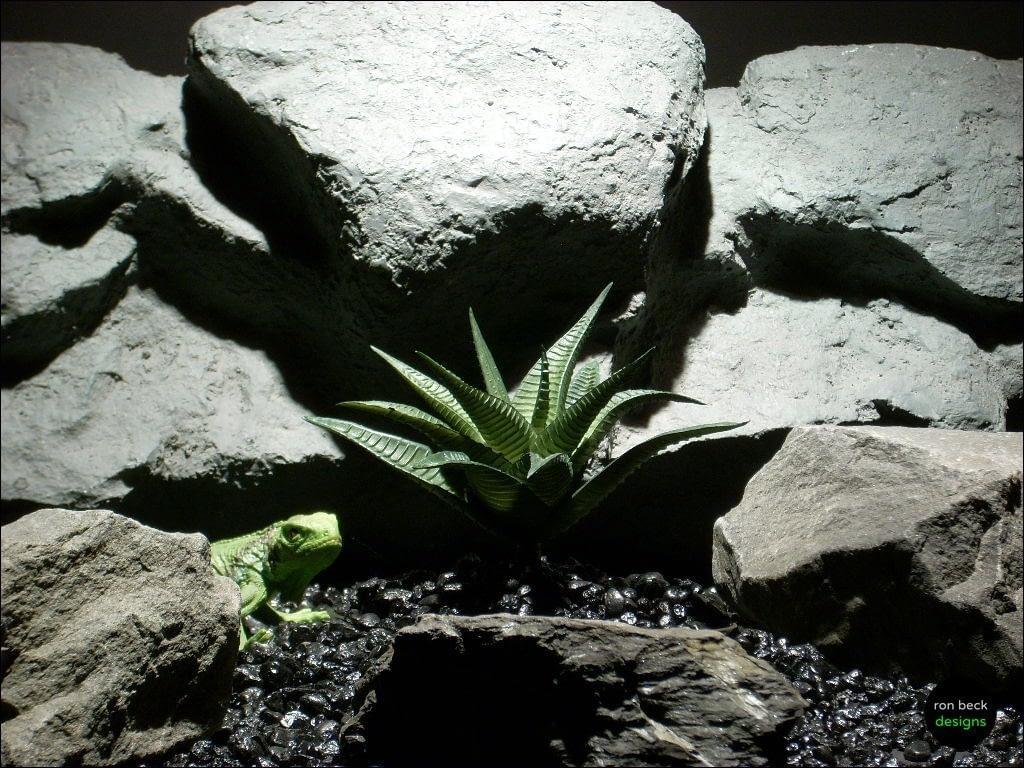 reptile habitat plant aloe psc082