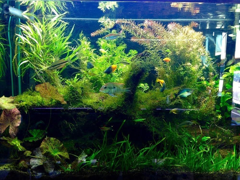 authentic aquariums