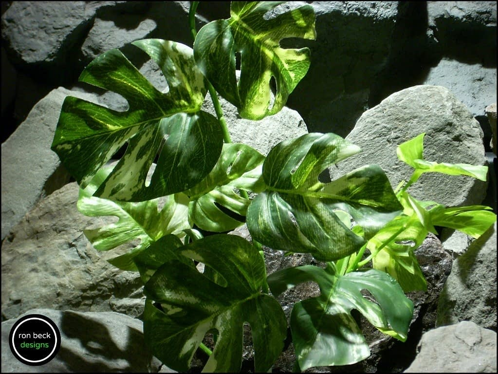 silk reptile plant variegated monstera leaves from ron beck designs. srp190 2