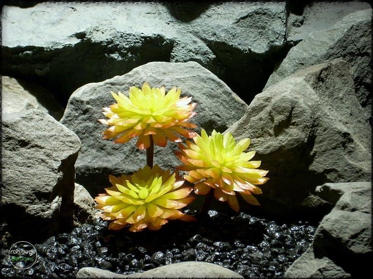 Sempervivum Cmiral Succulent | Artificial Reptile Plant prs265 2