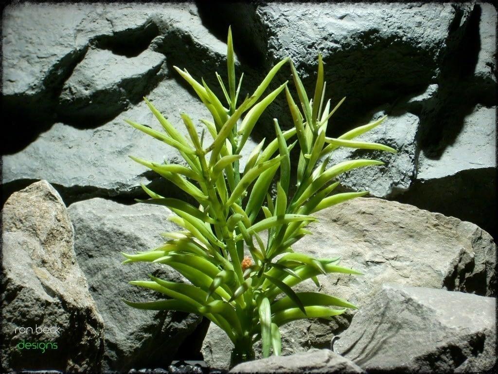 reptile plant triple bean succulent prs233 ron beck designs 2