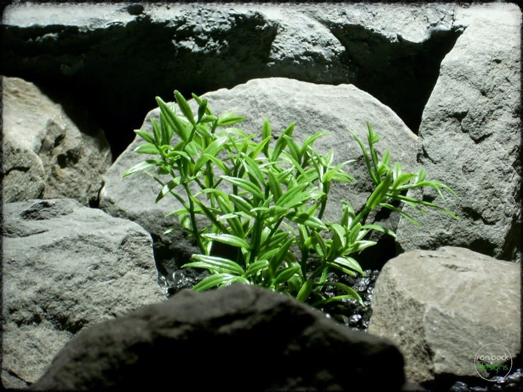 dwarf hygrophila artificial aquarium plants | ron beck designs pap273 3