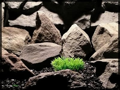 Bright Green Low Saw-blade Grass - Artificial Reptile Habitat Plant - prp349
