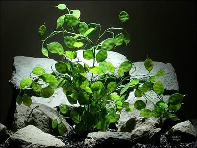 plastic aquarium plants money tree pap096 by ron beck designs
