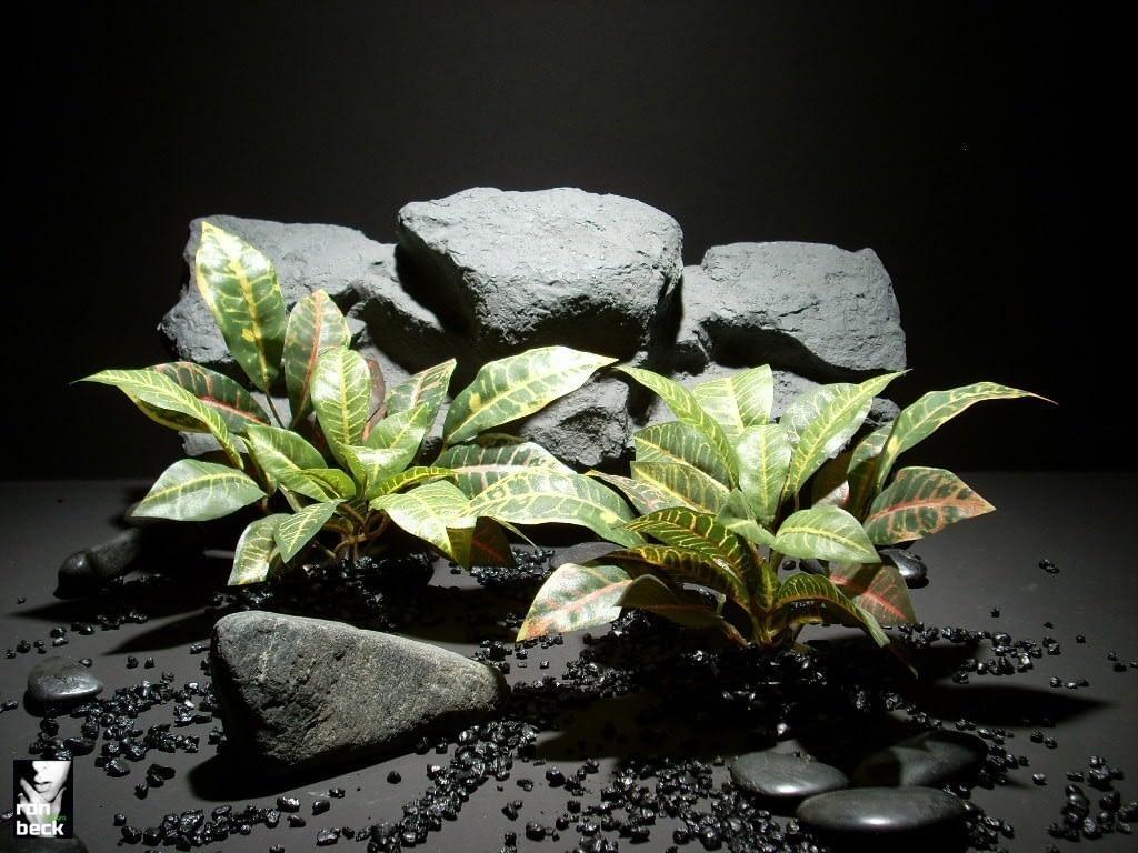 aquarium plants mini croton lvs sap391 ron beck designs