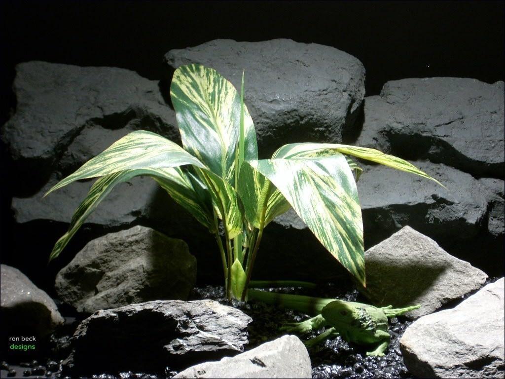 reptile habitat plants  dracena lvs vargtd sarp047  ron beck designs