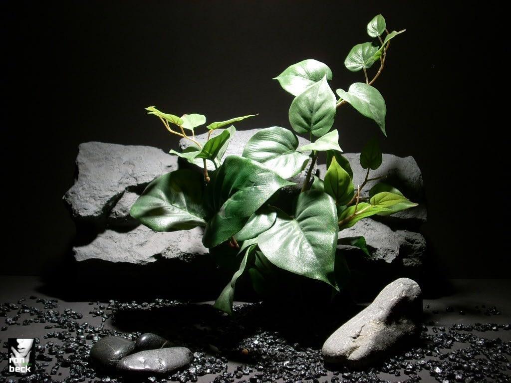 reptile habitat plants philo bush sap383, silk, ron beck designs