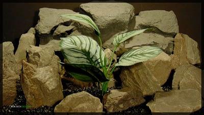 Artificial Calathea Prayer Plant - Silk Reptile Habitat Plant - srp352