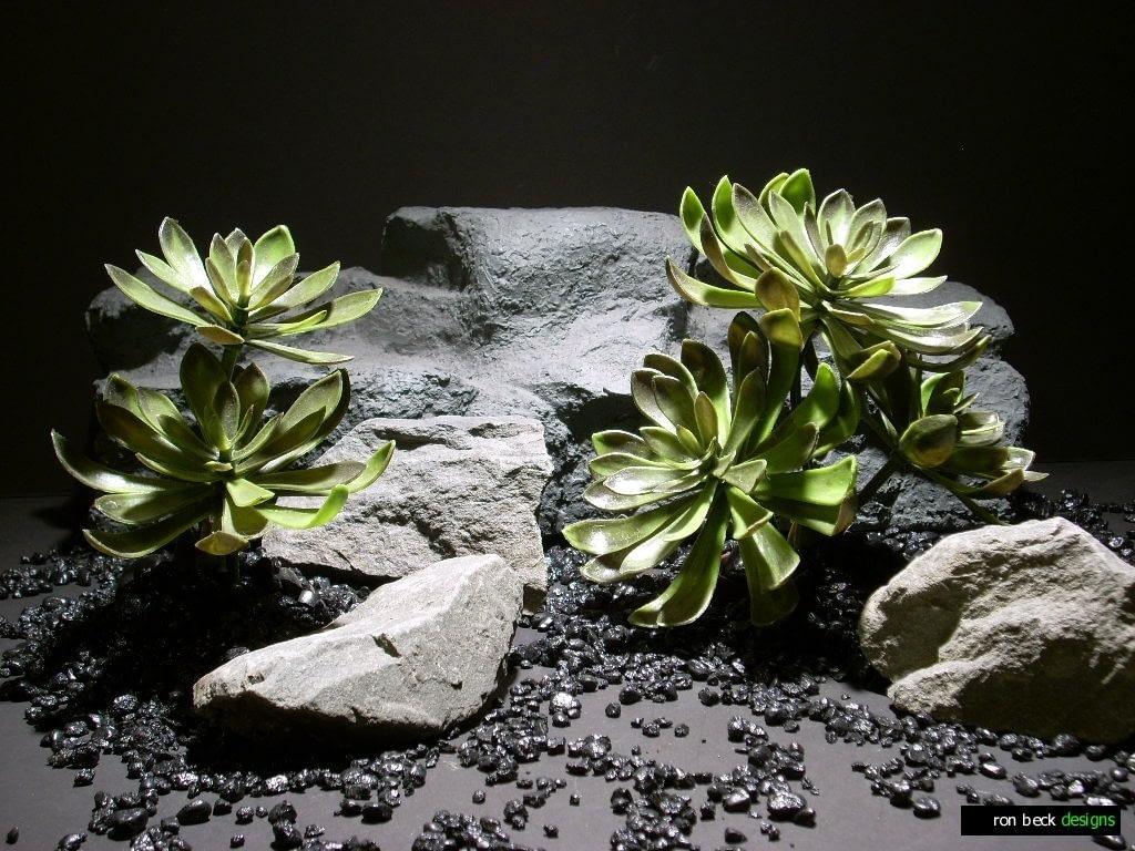 reptile decor plants: succulent pap197 ron beck designs