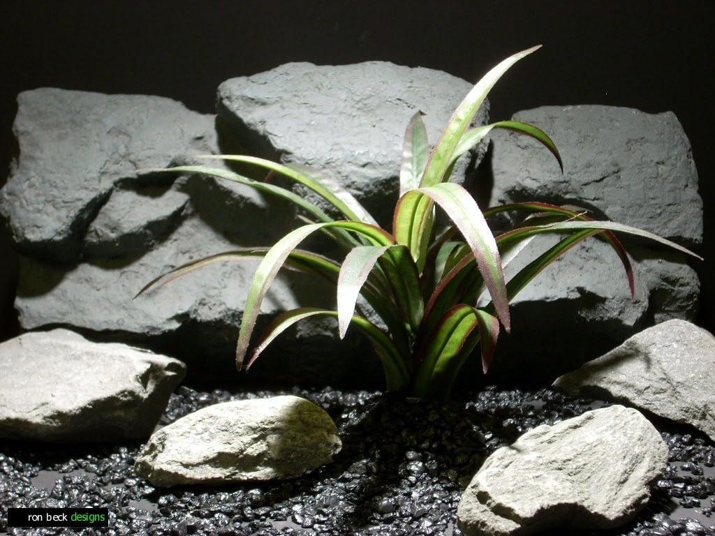 reptile habitat plants cordy line spider sap412 silk  ron beck designs