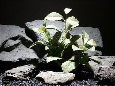 silk aquarium plants fitonia bush sarp042 ron beck designs