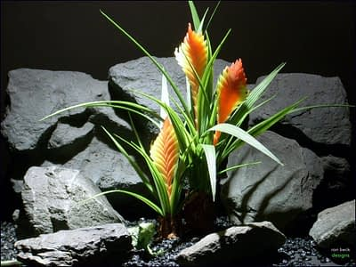 reptile habitat plants Bromeliad prp061 plstc. ron beck designs