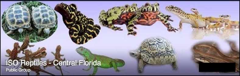 facebook ISO Reptiles - Central Florida 2015-11-23 22-25-53