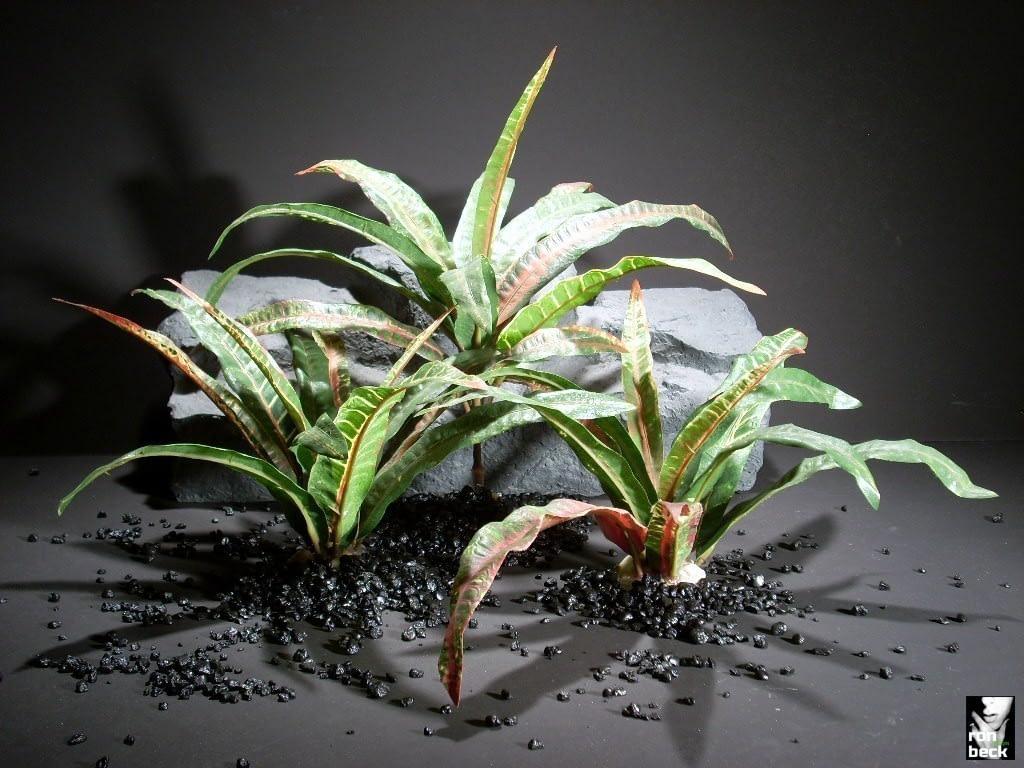 reptile habitat plants croton leaves sap394 ron beck designs