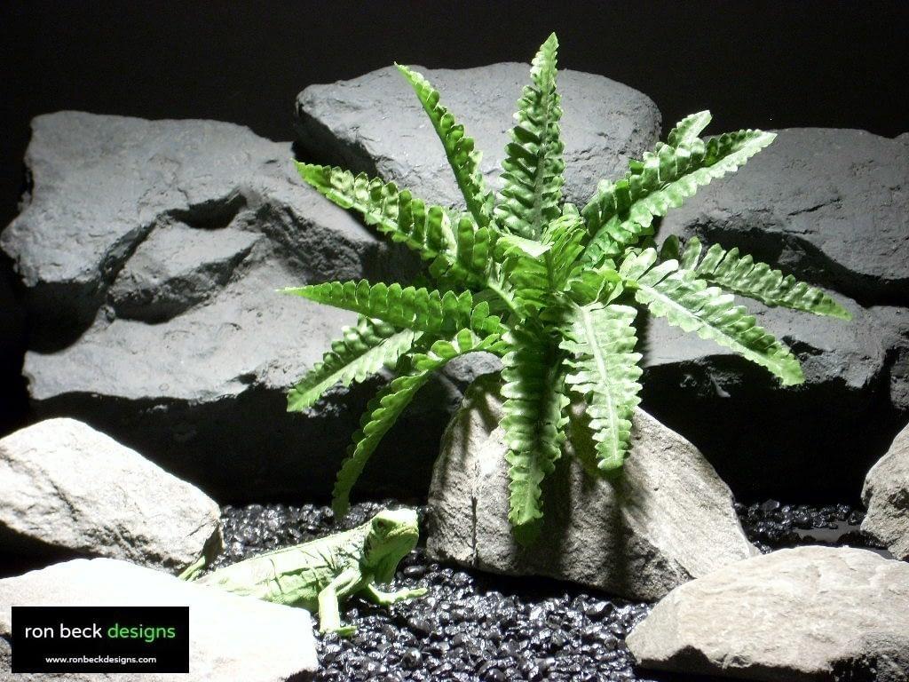 reptile habitat plants fern exposed trunk srp007  ron beck designs