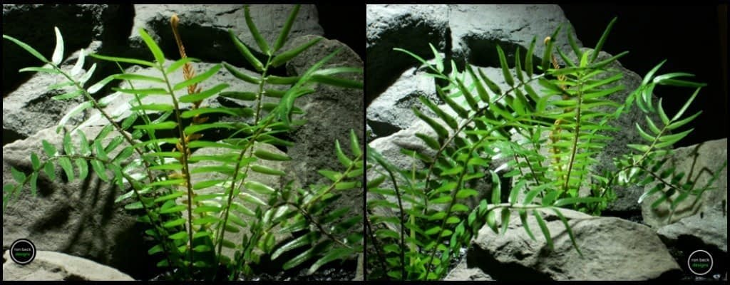 reptile-plant-artificial-boston-fern-up-close-3-from-ron-beck-designs