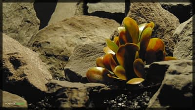 Artificial Schefflera - Artificial Reptile Habitat Plant - prp351