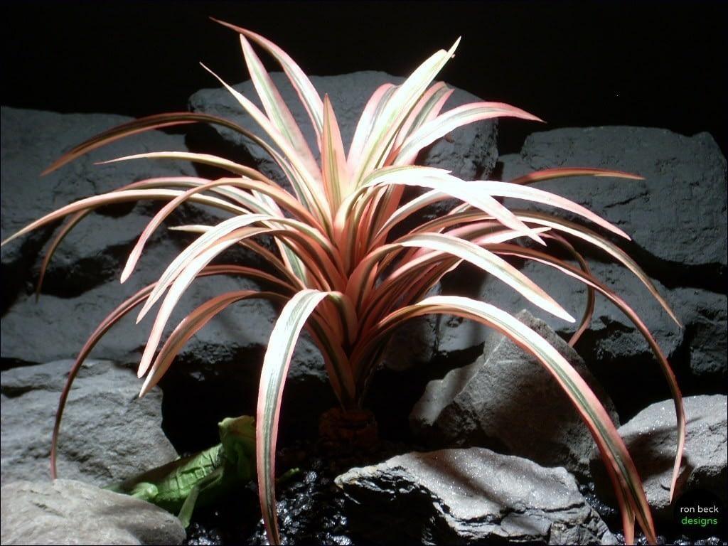 reptile habitat plants red dracena bush srp048   ron beck designs