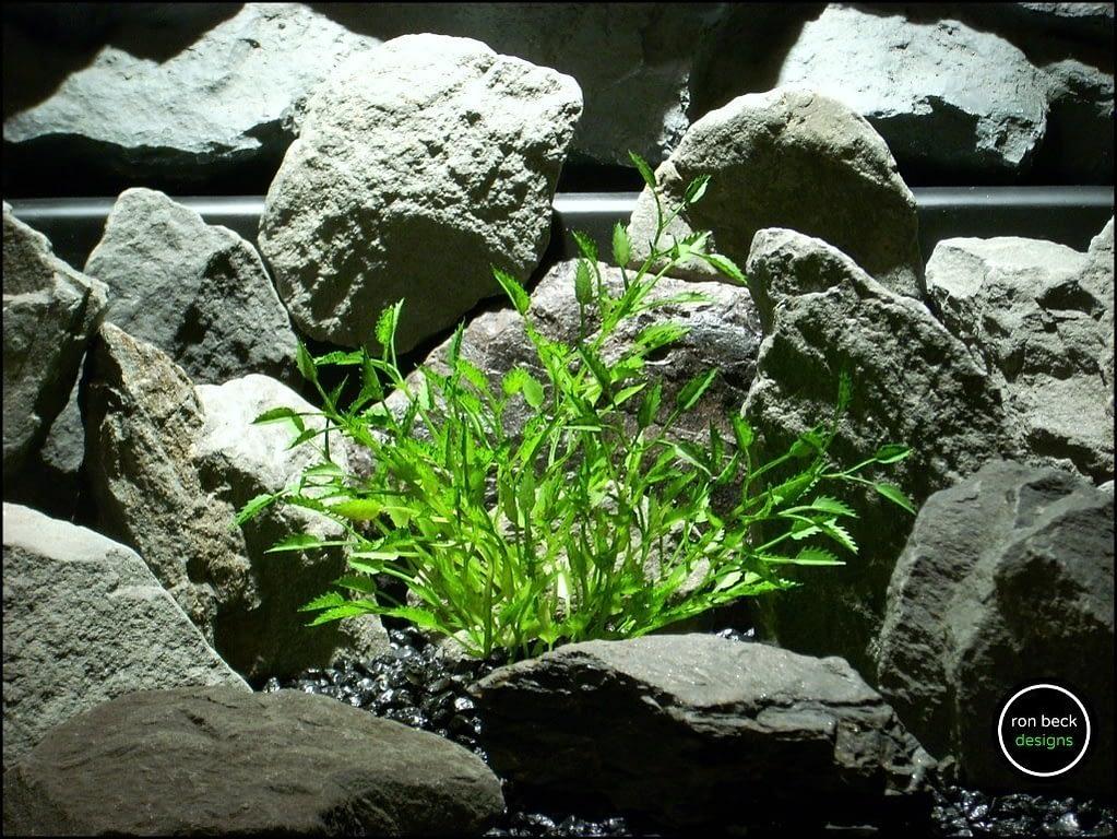 plastic aquarium plant mini saw grass from ron beck designs. pap186