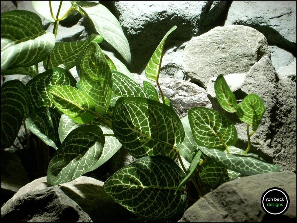 silk aquarium plants Fittonia Albivenis from ron beck designs. sap191 2