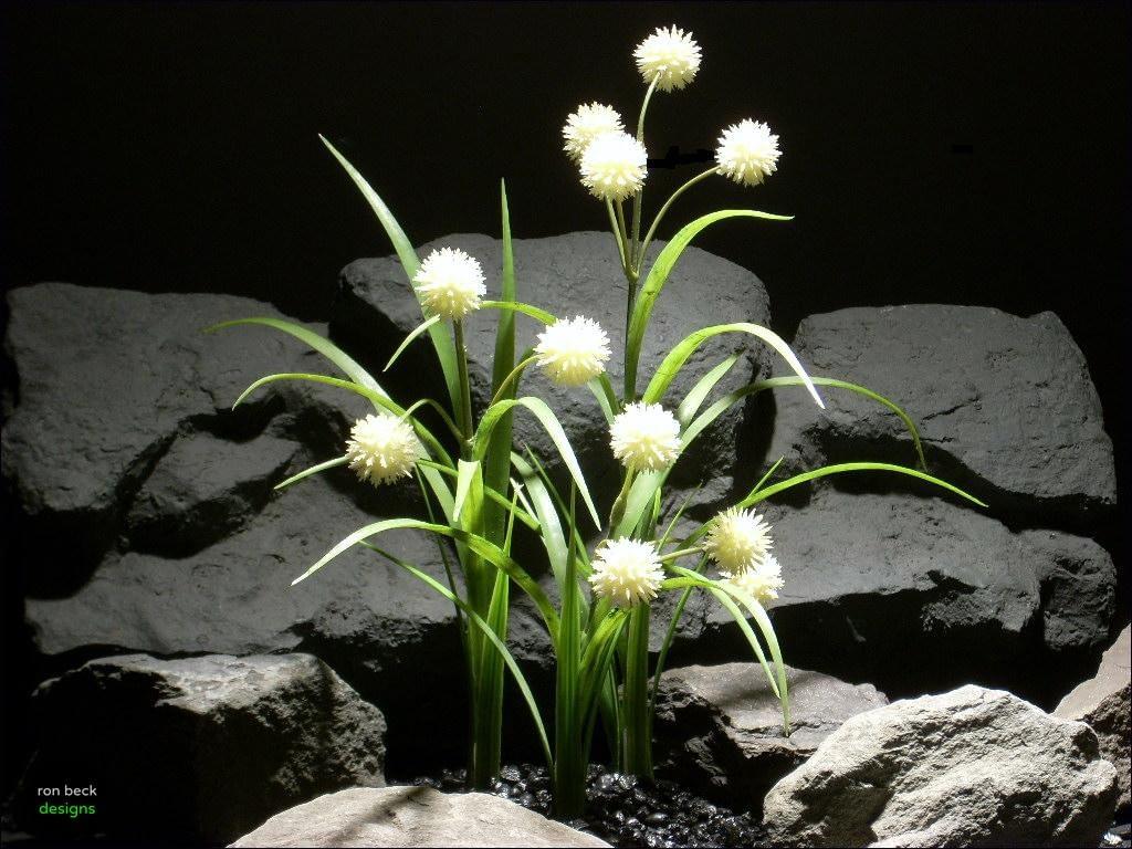 aquarium plants Allium plot parp046  ron beck designs