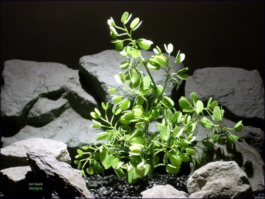 plastic aquarium plants bauhinia spray parp069 plstc. ron beck designs